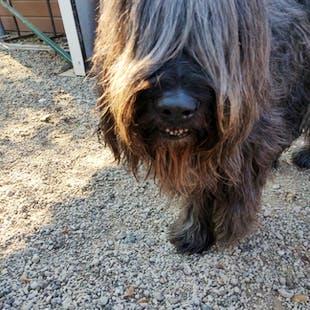 Dogs - £45/ dog