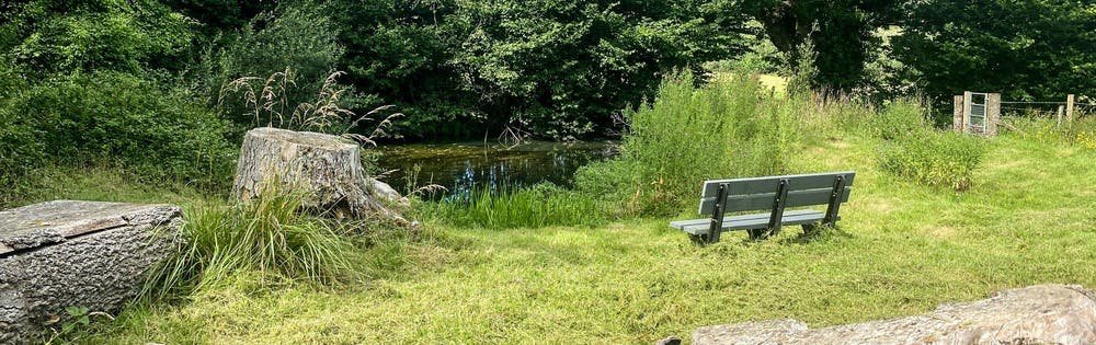Picnic area around the pond