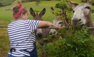 Fliss talking to our neighbouring farms donkeys!!!