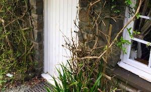 Wanws front door