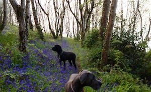 Dogs at Waterwynch