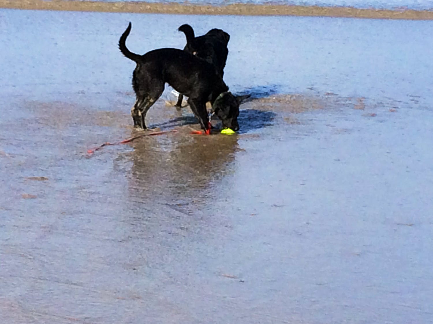 Beach Holidays with Dogs   Holiday Ideas   West Country