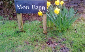 Moo Barn spring