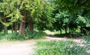 The Estate road leading to the barns and Blo Norton Hall