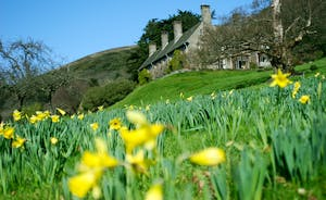 Bossington Hall - Parts of the lawns are a carpet of daffodils in the early spring; a wonderful sight