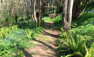 Woodland walks in the grounds