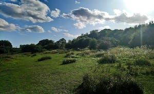 Pig Leg Lane nature reserve