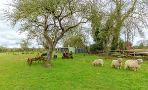 Orchard View - Utterly bucolic; sheep grow fat in the orchard