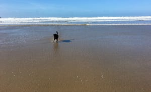 Polzeath Beach at Low Tide