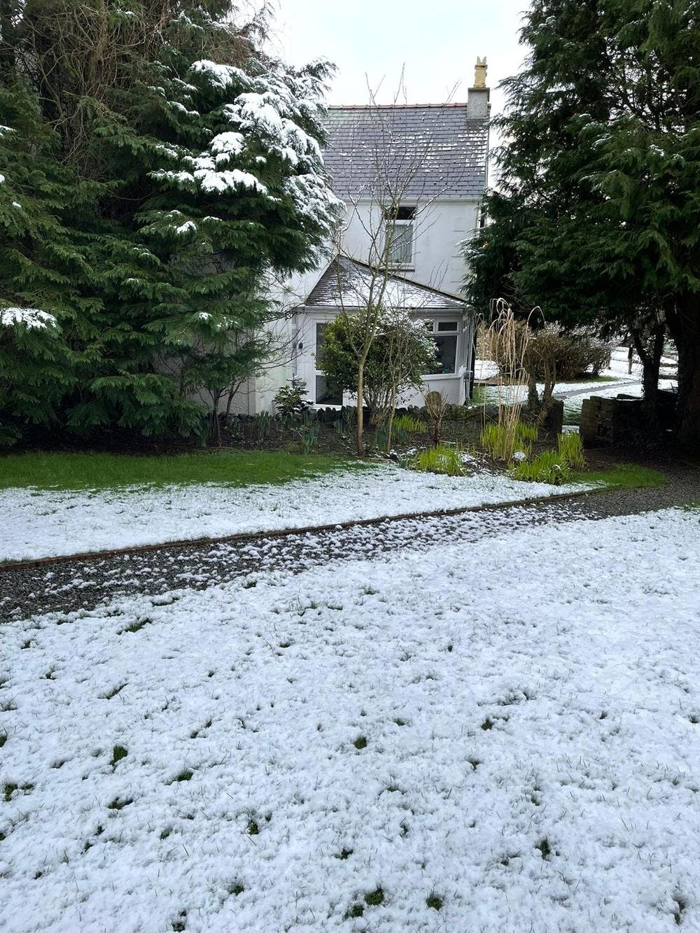 A dusting of snow on the lawn at Bodfan