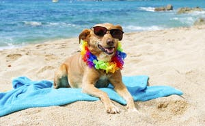 Dogs Are Allowed On Some Beaches All Year Round