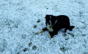 Toby - our sheep dog and the first sign of snow this year.