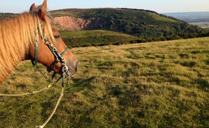 Our Quantock pony Bobby with Triscombe Quarry behind