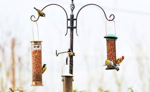 Friendly goldfinches