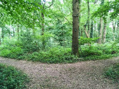 Paths in the wood