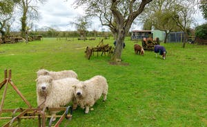 Orchard View - Sheep and ponies graze contentedly in the orchard at the end of the garden