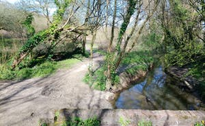 Nature reserve (& Monktonmead Brook)