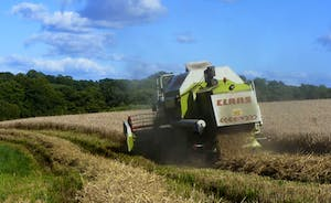 Combining our crops July/August