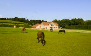 Fuzzy Orchard - Set in is own 2 acres in beautiful Somerset countryside