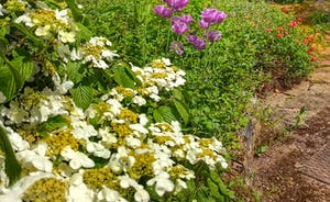 Ilbeare - Garden May 2018