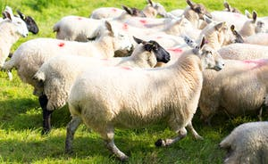 Pound Farm - This idyllic country retreat sits within a working sheep farm in the heart of Somerset