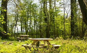 Picnic tables up in the woods for you to use and enjoy.
