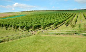 Pebblebed Vineyard just minutes away