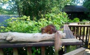 Squirrel visitor