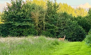 The Cottage Beyond: If you're quiet, if you're very, very quiet, you might spot roe deer feeding in the wildflower meadow