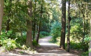 Delamere Forest on the doorstep